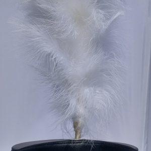 Witte pluimen